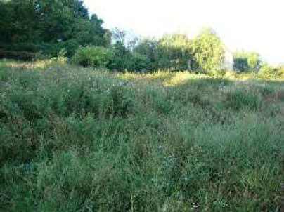 Débroussaillage et destruction des chardons des champs obligatoires